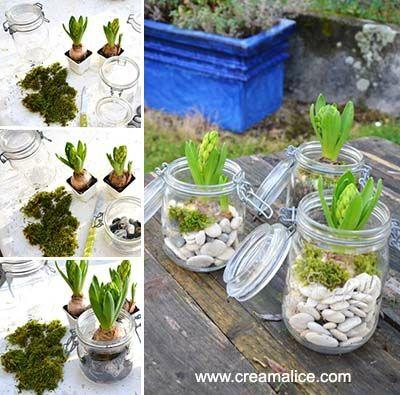 Jardin d 39 hiver diy bocaux jacinthes mooi for Pinterest bricolage jardin