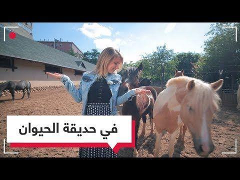 تعلم الروسية مع ناستيا سفيب Youtube Horses