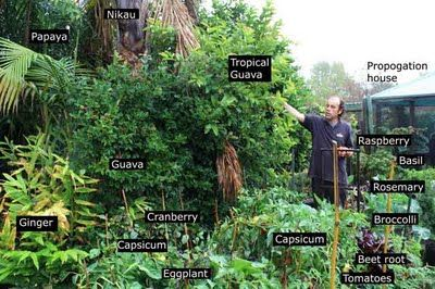 Forêt comestible