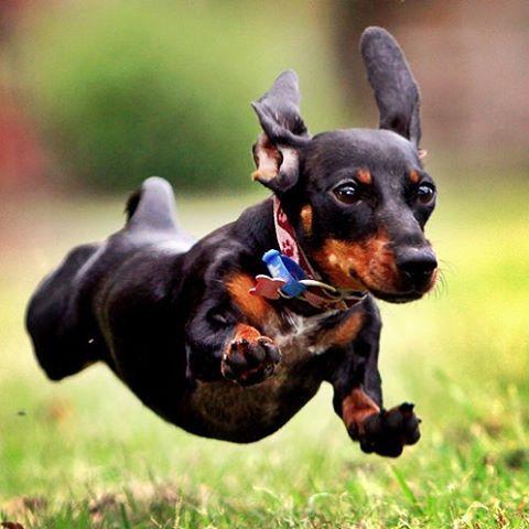 #partiu Fim de semana!! #cachorro #instadog #pet #queromaispet #fimdesemana #sextalinda