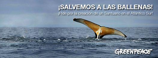 ¡Salven a las ballenas!  ¡Firma por la creación de un Santuario de Ballenas en el Atlántico Sur! http://bit.ly/1pibkkf