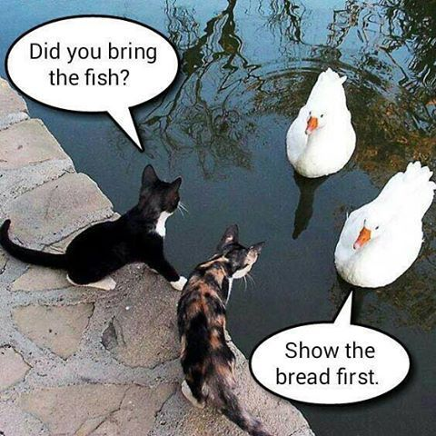 cats and ducks