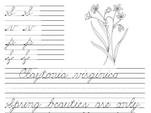 American Cursive Worksheets Free: Frans Freebies free printable cursive worksheets on endangered    ,