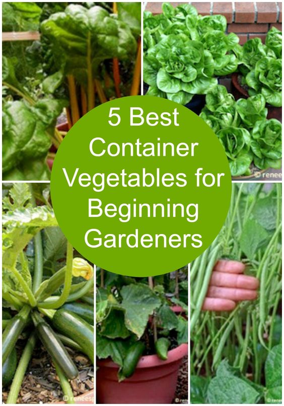 The 5 best container vegetables for beginning gardeners. 5 Best Container Vegetables for Beginning Gardeners   Pinterest