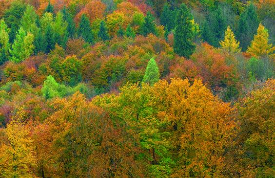 Herbstwald To buy this picture please visit www.3aART.de Zum Erwerb dieses Bildes besuchen sie bitte unsere Hompage www.3aART.de