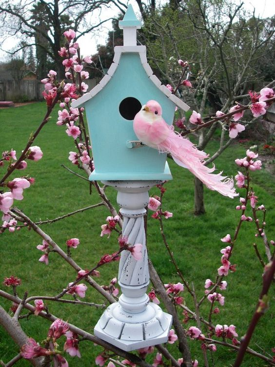 Pink bird, pink blossoms