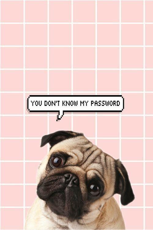Best Cute Iphone Wallpapers In 2020 Dog Wallpaper Pug Wallpaper