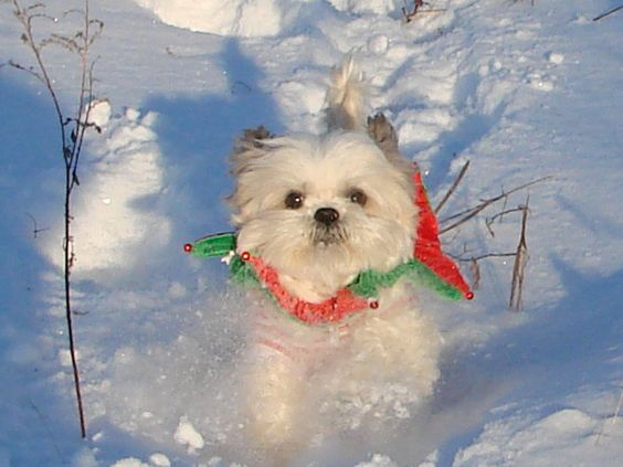 Running in the snow after we cut down our Christmas tree 2009 @ Johnson's Tree Farm, Franklinville, NY <3 U Max!