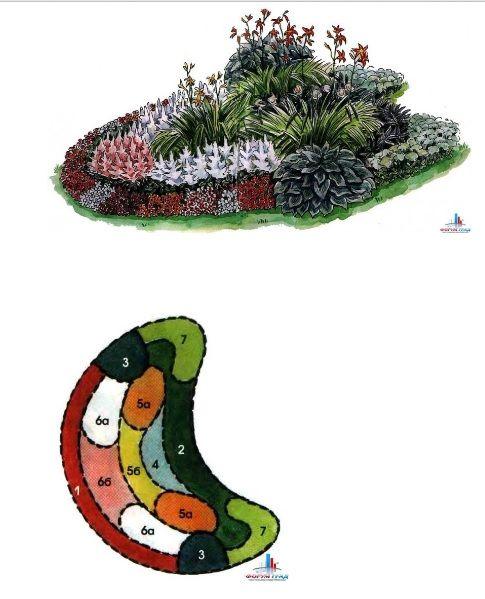 1. Бальзамин садовый (Impatiens balsamina) 2. Очиток видный (Sedum spectabile) 3. Хоста Зибольда (Hosta sieboldiana) 4. Пион молочноцветковый (Paeonia lactiflora) 5a. Лилейник буро-желтый (Hemerocallis filva) 5б. Лилейник Миддендорфа (Hemerocallis middendorfii) 6а. Астильба Арендсена (Astilbe x arendsii 'Irrlicht') 6б. Астильба Арендсена (Astilbe x arendsii 'Ametist') 7. Астра однолетняя (Callistephus chinensis 'Blanca') Растения подобраны так, что бы цветник был декоративен весь летний…