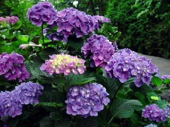 Purple looks fabulous