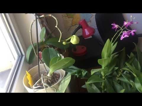 Storczyki Orchidee Zima Porady Dla Poczatkujacych Cz 3 Youtube Plants Garden
