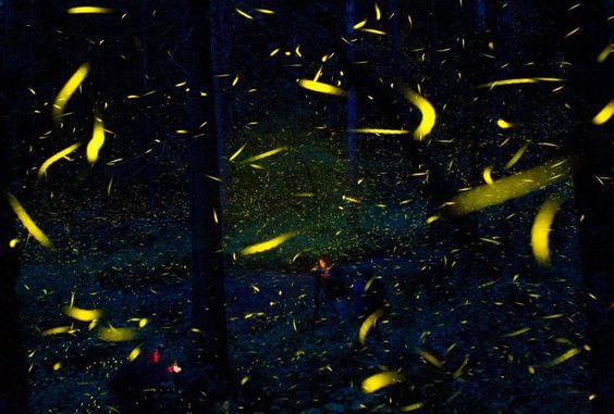 Im Wald von Nanacamilpa glüht regelrecht die Luft: Jede Nacht von Juni bis...