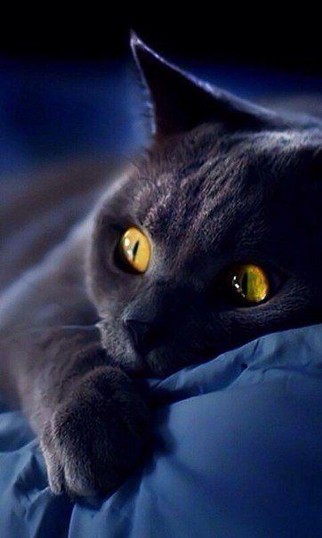 Gato lindo demais