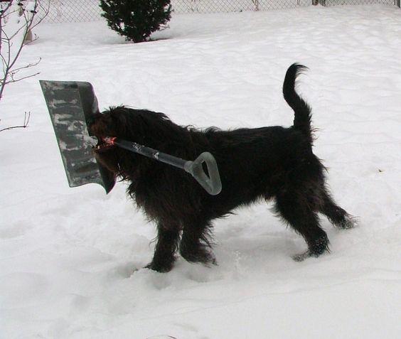 Snow Gus