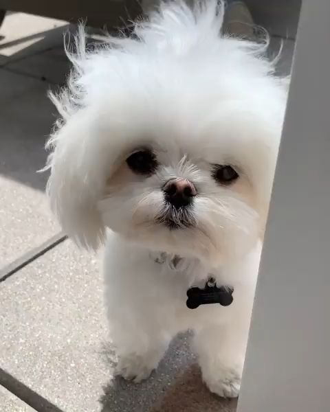 Unique Dogs With Incredibly Amazing Coats Cute Baby Animals