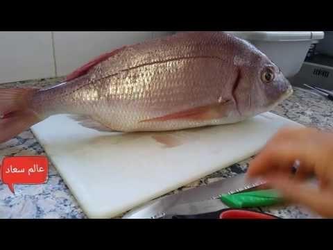 كيفية تنظيف سمكة كبيرة و فتحها من الظهر Youtube Fish Meat