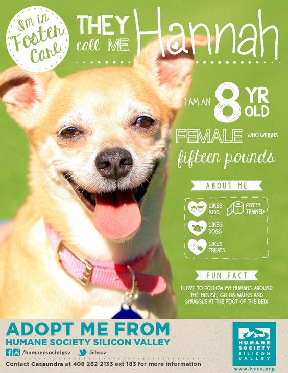 Adoptable Crossbreed Mix Hannah 120553 Humane Society Silicon Valley Potty Training Kids Humane Society Foster Dog