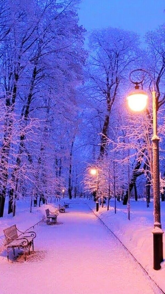 Winter Park Christmas 2020 Nice winter park in 2020 | Winter scenery, Winter pictures, Winter