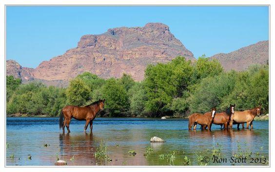 Salt River wild horses beautiful in Arizona