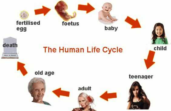 the stages of journey in a human life From birth to death - human life learn with flashcards, games, and more — for free.