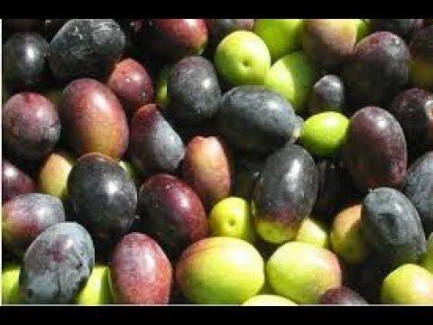 طريقة تخليل الزيتون الاسود التفاحى فى البيت صندوق الوصف مهم Youtube Fruit Olive Plum