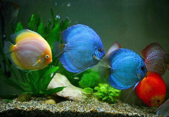 Sagar fish aquarium is one of india 39 s biggest fish for Types of aquarium fish