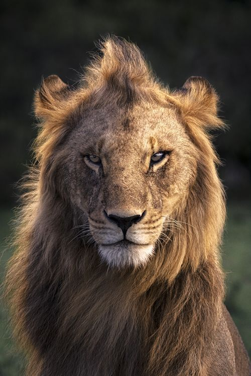 This photograph was taken in the Masai Mara Reserve in 2014