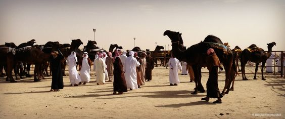 Al Dhafra Festival & the Camel Beauty Contest | Discover the UAE | BabyGlobetrotters.Net