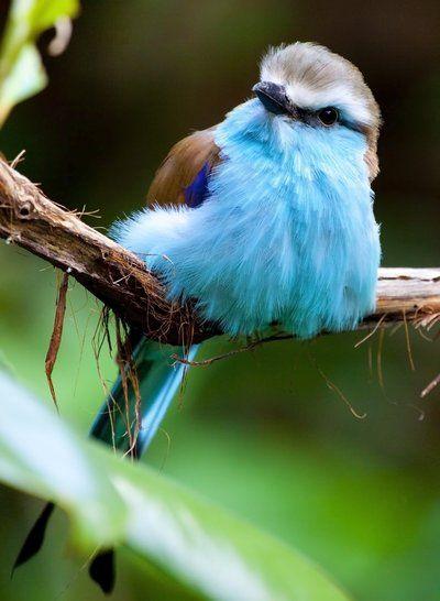 oooooh I <3 birds