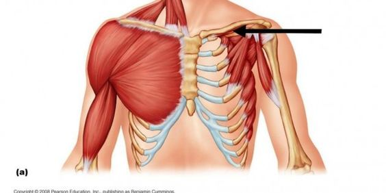 Carlsbad Boot Camp - Chest Muscles