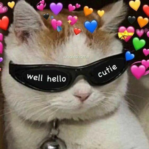 Ann On Twitter Cute Love Memes Cute Cat Memes Wholesome Memes