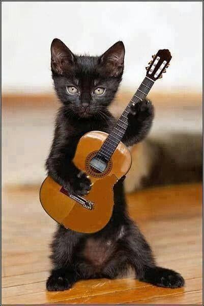 Let's play guitar! -- Pour ADOPTER des chatons à Bordeaux, à l'Ecole du Chat Libre, cliquer 2X