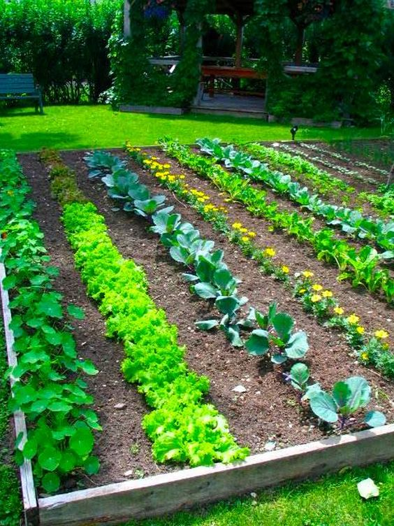 A very organized and beautiful vegetable garden ...