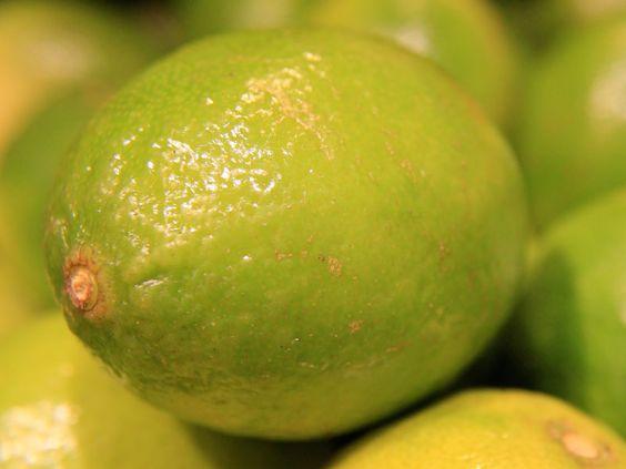 pé de limão-galego