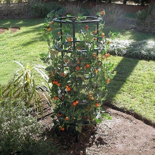 The Ultimate Tomato And Plant Growing Cage By Griffith 400 x 300