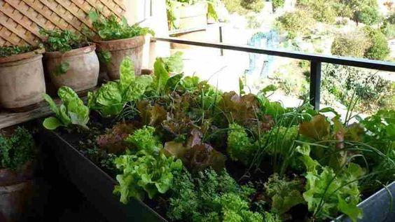 qué plantar en huertos urbanos con poca luz