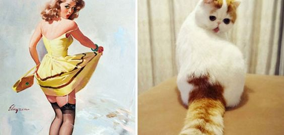 32 gatos que pensam que são garotas Pin-up | Tudo Interessante | Curiosidades, Imagens e Vídeos interessantes | Cats