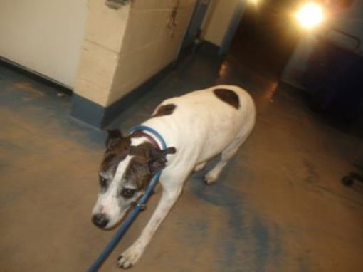 Inverness Fl Mixed Breed Large Meet Owner Deceased Hwy 200