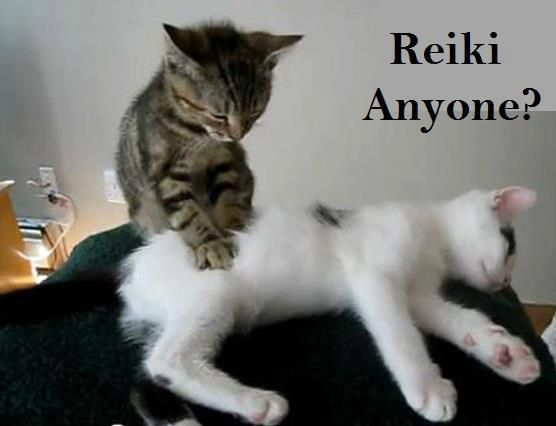 Image result for animal reiki