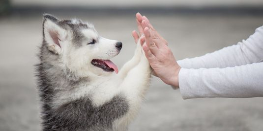 Emotional Support Animals Preserving Your Pet S Important Role