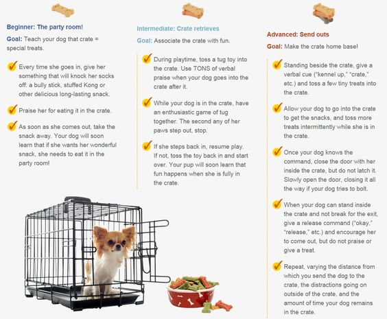 Awesome Crate Games for Dogs - dogstylenetwork.com