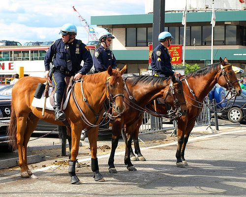 PMU NYPD Mounted Police Officers on Horseback at 42nd Street, New York City