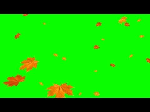 Green Screens Falling Leaves Autumn Youtube In 2020 Greenscreen Green Screen Video Backgrounds Autumn Leaves