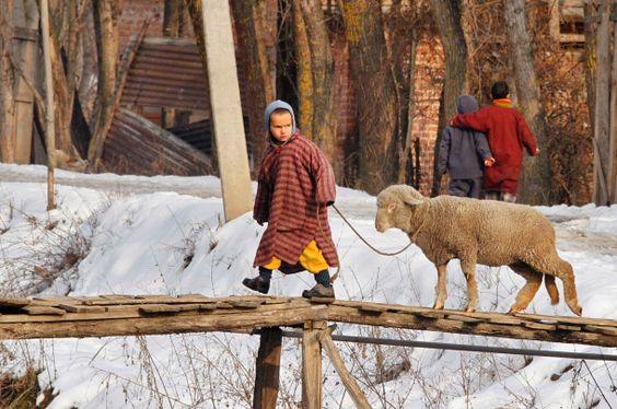 In der nordindischen Stadt Srinagar führt ein Junge sein Schaf über einen Fluss