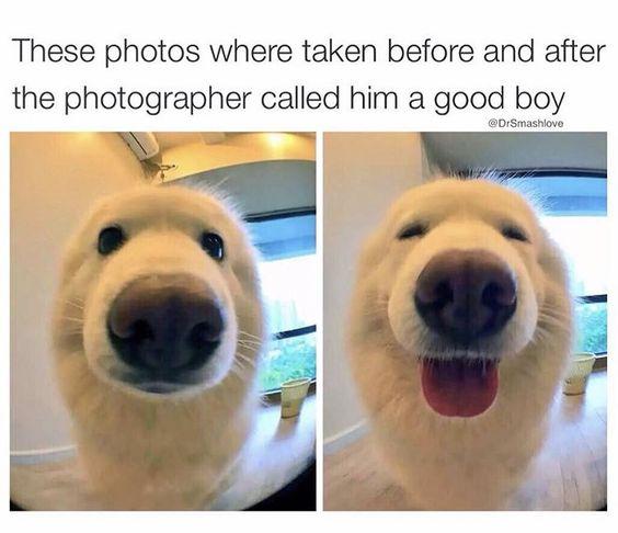 Good boy: