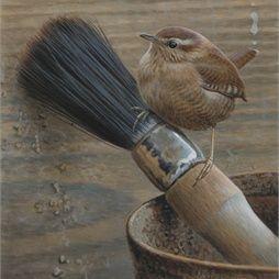 Illustration of wren bird © Andrew Hutchinson