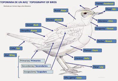 Blog del IES Laguna de Tollón: How to become a birdwatcher