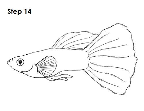 Guppy Fish Drawing 14 In 2020 Drawings Animal Drawings Fish Drawings