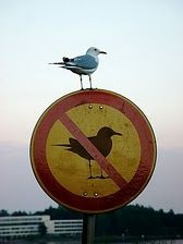 Wow. What a rebel.