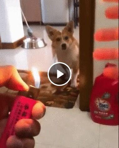 Cãozinho se assusta com a brincadeira do seu dono e foge